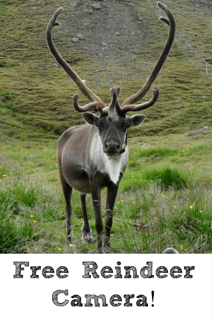 Excited for Christmas? One way to get into the holiday mood is to watch Reindeer Camera!! This is a free live stream is a great way to get the kids excited!