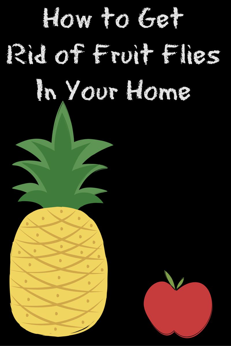 how to get rid of fruit flies in your home. Black Bedroom Furniture Sets. Home Design Ideas