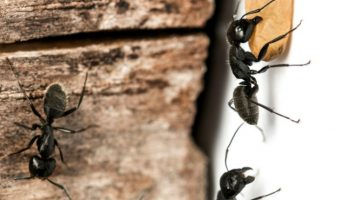 How to Get Rid of Ants in Your Home