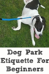 These easy Dog Park Etiquette For Beginners tips will be sure to make your fist visit at the dog par go easier and smooth with the interaction and exercise.