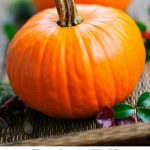 Perfect Fall Pumpkin Recipes To Try!