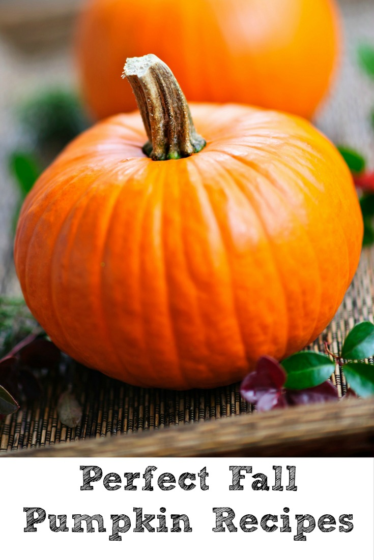 Pumpkin Recipes are a favorite in my house, the perfect sign that fall is upon us and the cooler weather as well! It can be entrees, breads, and desserts!