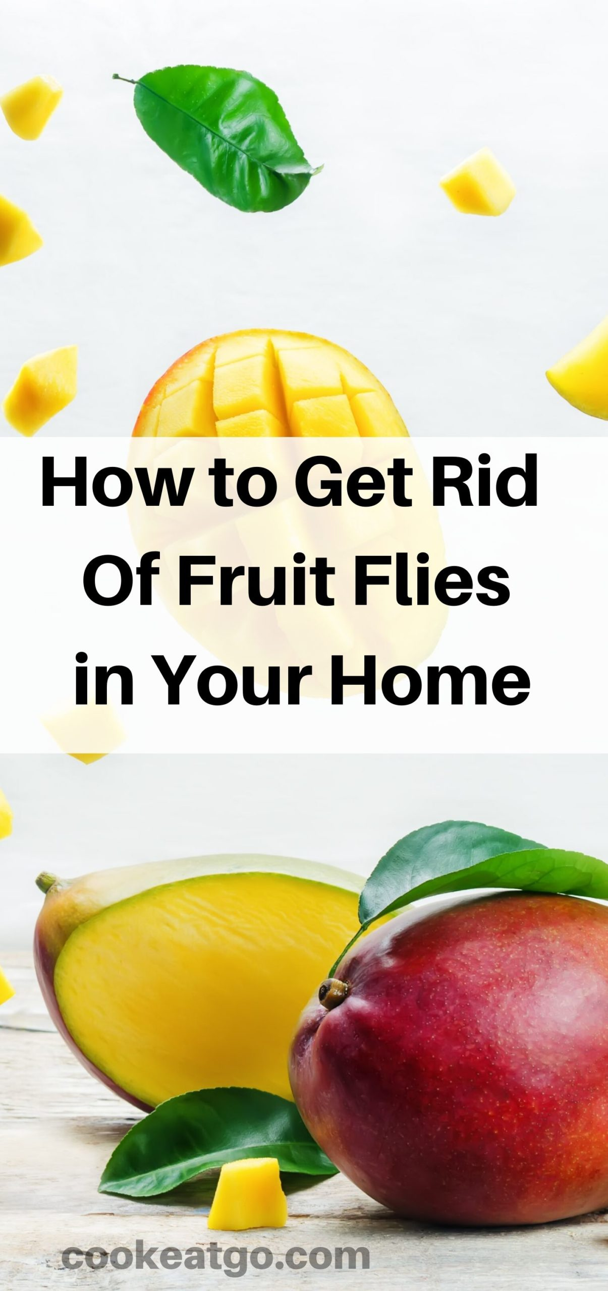 How to Get Rid of Fruit Flies in Your Home!! Thankfully there are a couple of several frugal ways to get rid of them and prevent them as well.