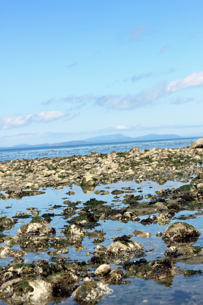 There is a lot to See And Do At Fort Ebey State Park! Explore the tide pools, the military bunkers, explore the lake, go hiking, fishing, and camping!