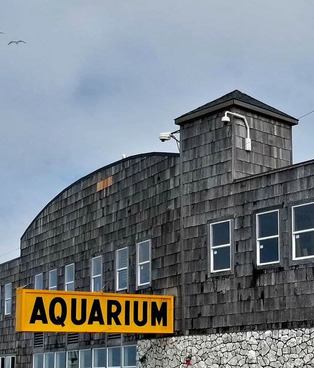 The Seaside OR Aquarium is the perfect place to visit while in Seaside, Oregon! There is a lot of local history and seals to feed as well!